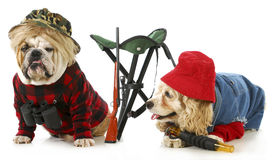 Hunting dogs. American cocker spaniel and english bulldog dressed up like   on white background Royalty Free Stock Photos