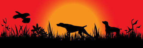 Hunting dogs catching bird. Hunting dogs catching the bird in field vector illustration