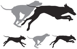 Hunting dogs run vector silhouettes Stock Photography