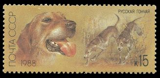Hunting dogs, Russian Hound. USSR - stamp printed in1988, Series Hunting dogs, Russian Hound stock image