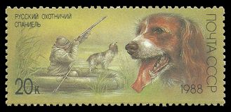 Hunting dogs, Russian Spaniel. USSR - stamp printed in1988, Series Hunting dogs, Russian Spaniel royalty free stock images