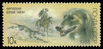 Hunting dogs, Taigan. USSR - stamp printed in1988, Series Hunting dogs, Taigan stock photos