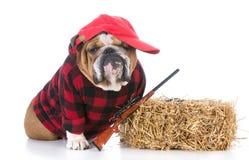 Hunting farm dog Royalty Free Stock Photo