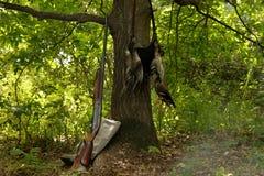 Hunting, game, gun, wood. Grass green horizon idyllic Stock Image