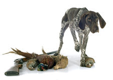 Hunting games and dog Royalty Free Stock Photos