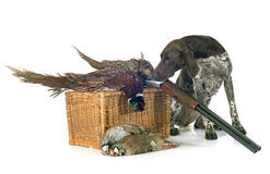 Hunting games and dog Stock Photos