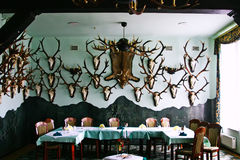 Hunting hall. Room full of hunting trophy Royalty Free Stock Photo
