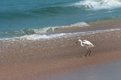Hunting heron on beach Stock Photos