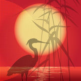 The hunting heron. Illustration with  heron which hunts in the reed against red sunset background Royalty Free Stock Photo
