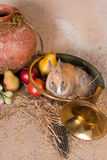 Hunting horn and rabbit Stock Photos