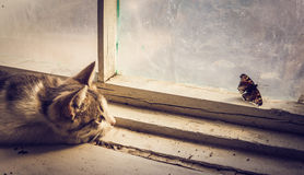 Hunting instinct in action. Small rustic purebred kitten playing with a beautiful butterfly. Hunting instinct in action Royalty Free Stock Images