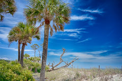 Hunting island beach  scenes Royalty Free Stock Images