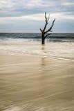 Hunting Island Skeleton Tree Royalty Free Stock Photo