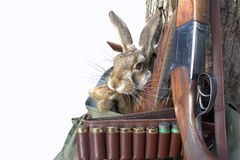 Hunting items. hunting concept. hunting background. Hunting scene with rifle Rabbit and pheasant feathers isolated on white. Usable for hunting newspaper Royalty Free Stock Images