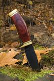 Hunting knife. That's in a stump in autumn royalty free stock photo