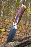 Hunting knife. In a log in the middle of autumn stock photo