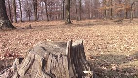 Hunting knife falling on tree stump stock footage