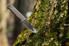 Hunting knife stuck in tree in forest royalty free stock images