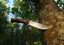 Hunting knife in  tree trunk Royalty Free Stock Photo