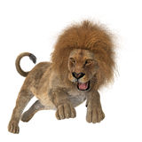 Hunting Lion Royalty Free Stock Photography