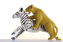 Hunting lion on a zebra plastic toy Stock Photography