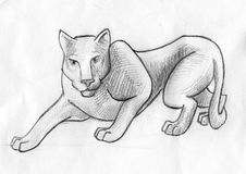 Hunting panther sketch. Hand drawn pencil sketch of a hunting panther Royalty Free Stock Image