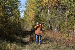 Hunting ruffed grouse. Ruffed grouse hunter enjoys the autumn setting Stock Image