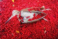 Hunting scene bird with red berries Stock Photo