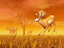 Hunting scene in the nature Stock Image