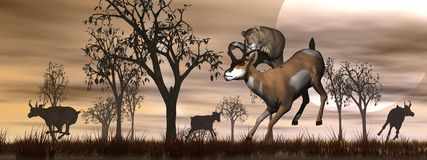 Hunting scene in the nature Stock Photography