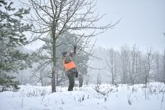 Hunting season, pheasant hunting. Hunters are standing in the forest waiting for the bird royalty free stock photo