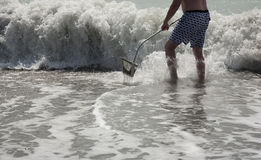 Hunting for shark teeth on Venice beach Florida. Searching for shark teeth on Venice beach Florida , using a Florida shovel stock images