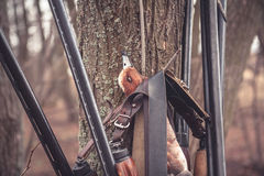 Hunting shotguns hanging on tree with prey after successful duck hunting royalty free stock photo