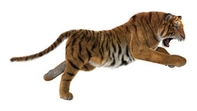 Hunting Tiger stock image