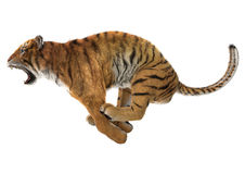 Hunting Tiger Stock Images