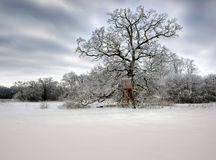 Hunting tower. Cold winter day at a hunting tower Royalty Free Stock Images