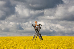 Hunting tower on the rape field Stock Photography