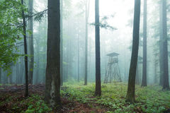 Hunting tower. In wild forest Royalty Free Stock Images