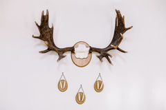 Hunting trophies on the wall Stock Photos