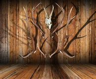 Hunting trophies on wood. Abstract view of hunting trophies on wooden finished room Royalty Free Stock Photos