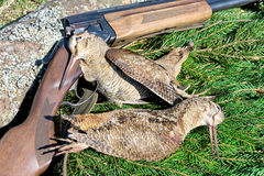 Hunting trophies - woodcocks closeup Stock Photo