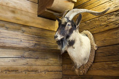 Hunting Trophy. Hanging on the chalet wall at Galtür, Austria stock photography