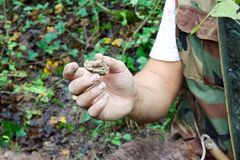 Hunting for white truffles in Istria, Croatia Stock Photography