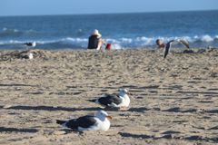Huntington Beach fotografia stock libera da diritti