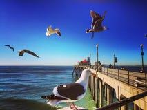 Huntington Beach pier seagulls. Seagulls on Huntington Beach pier Royalty Free Stock Photo