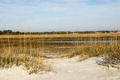 Huntington Beach State Park Salt Water Marsh in South Carolina. The sand dunes, the seat oat grass and salt water marshes are environmentally protected at stock image
