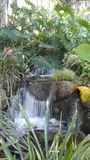 Huntington Gardens Tropical Area. A mini waterfall among the ground cover Royalty Free Stock Image