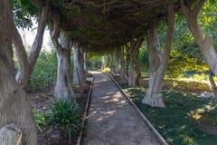 Huntington-Garten-Spur lizenzfreie stockbilder