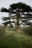 huntmaster en el puesto de observación y esperar el resto de la caza Fotos de archivo libres de regalías