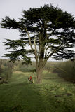 huntmaster na punkcie obserwacyjnym i czekanie dla odpoczynku polowanie Zdjęcia Royalty Free